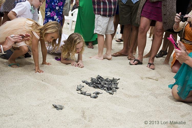 Sea turtles still coming up!